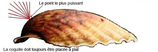 02 La coquille Saint-Jacques