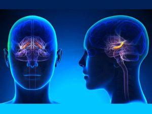 Thalamus, spirituel et santé